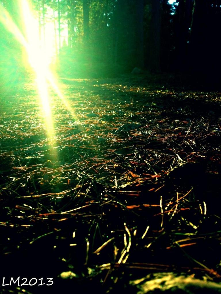 skog_sol - Kopia
