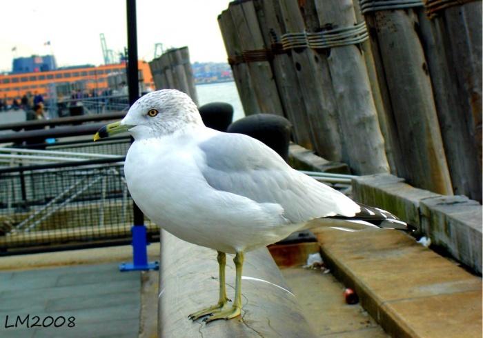 fågel1