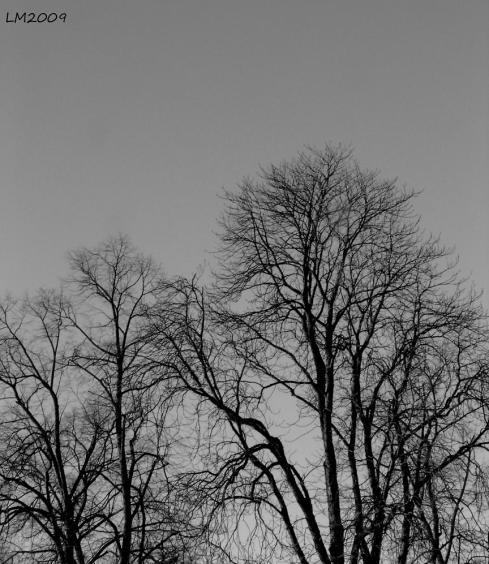 V13_2009_DSC00119 - Kopia