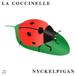 coccinelle_carré